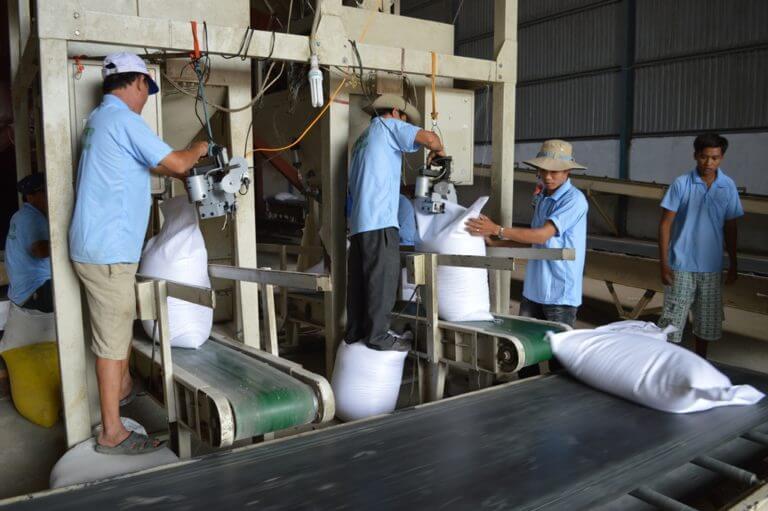 băng chuyền vận chuyển lúa gạo